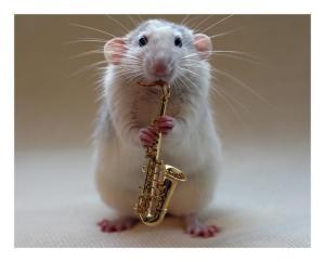 insolito-un-raton-toca-instrumentos-musicales2